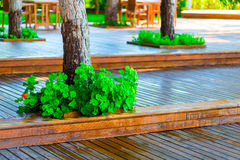 Wooden flooring in the park Royalty Free Stock Photos