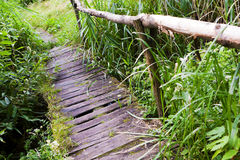 Wooden floors over the river, in the wild. Stock Photography
