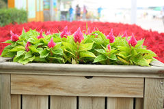 Wooden flower bed Stock Image