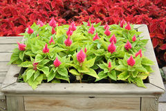 Wooden flower bed Stock Photo