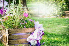 Wooden flower bed in the park with colorful spring flowers,  background of a lawn and the sunlit trees. Wooden flower bed in the park with colorful spring Royalty Free Stock Images