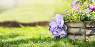 Wooden flower bed in the park with colorful spring flowers, on a background of a lawn the sunlit trees space for text banner. Wooden flower bed in the park with stock photo