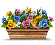 Wooden flower pot with pansies Royalty Free Stock Photo