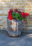 Wooden flower pot with  red flowers Royalty Free Stock Photos