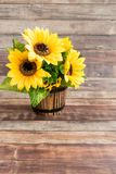 Wooden Flowerpot filled with Sunflowers royalty free stock photo