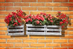 Wooden flowers boxes against an old brick wall - Home sweet home. Written on wooden box royalty free stock image