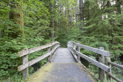 Wooden Foot Bridge Along Hiking Trail. In Silver Falls State Park Oregon stock photo