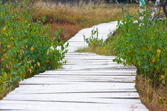 Wooden foot bridge Royalty Free Stock Image