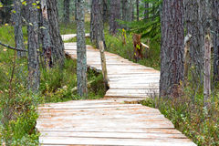 Wooden foot bridge Royalty Free Stock Photos