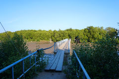 Wooden foot bridge over the river and mangrove forest Stock Photography