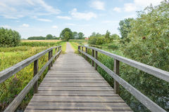 Wooden foot bridge in a rural landscape. Wooden foot bridge leading into a rural landscape in the Netherlands on a sunny day in the summer season Stock Photos