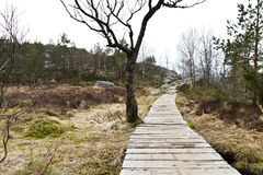 Wooden foot path in rural landscape Royalty Free Stock Image