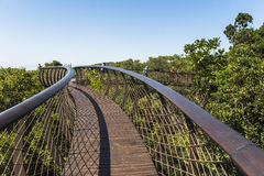 Wooden footbridge above trees in Kirstenbosch botanical garden, Cape Town Royalty Free Stock Images