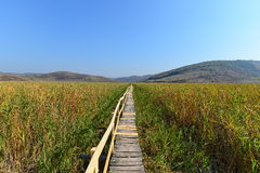 Wooden footbridge in autumn at the Sic reed reserve. Royalty Free Stock Image