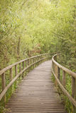 Wooden footbridge through a bamboo forest Stock Images