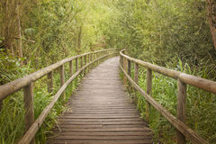 Wooden footbridge through a bamboo forest Royalty Free Stock Images