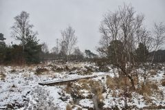 Footbridge / boardwalk between heather, grass and trees on a grey snowy winter day stock photography