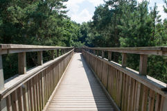 Wooden Footbridge Crossing High Up Over A Forest Stock Image