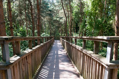 Wooden footbridge crossing high up over a forest Stock Photography