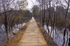 A wooden footbridge through dense rain forest Royalty Free Stock Photos