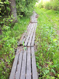 Wooden footbridge in forest Stock Photo