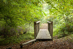 Wooden footbridge on a forest Stock Images