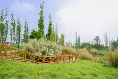 Wooden footbridge on grassy lakeshore in sunny spring Stock Photography