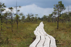 Wooden footbridge in Latvian swamp before the thunderstorm Stock Image