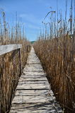 Wooden footbridge at reed reserve. Royalty Free Stock Photography