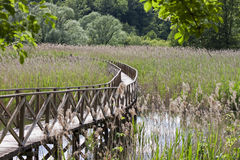 Wooden footbridge in the reedbed Stock Image