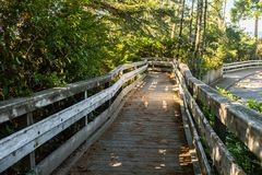 Wooden footbridge between the tree-lined that comes down from a high point of view near the dunes of Oregon stock photo