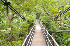 Wooden footbridge in tropical jungle Royalty Free Stock Photos