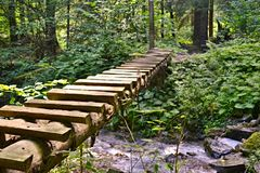 Wooden footbridgeove a dreek in forest stock images