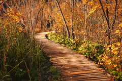 Wooden footpath in autumn forest Stock Photos