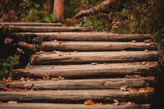 Wooden footpath in autumn forest Stock Photography