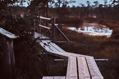 Wooden footpath on a beautiful autumn meadow in forest at sunset. Stock Images