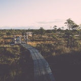 Wooden footpath on the bog Stock Images