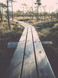 Wooden footpath on the bog Stock Image