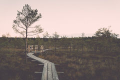 Wooden footpath on the bog Stock Photography