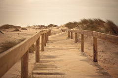 Wooden footpath through dunes at the ocean beach royalty free stock photos