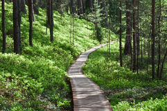 Wooden footpath in forest stock images