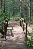 Wooden footpath in the forest. Wooden footpath in the green forest Royalty Free Stock Image