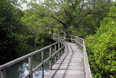 Wooden footpath. Footpath at the mangrove jungle bali Royalty Free Stock Photography