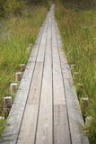 Wooden footpath in marshland Stock Photography