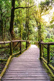 Wooden footpath nature trail at Doi Inthanon National Park in Chiang Mai, Thailand.  Royalty Free Stock Image