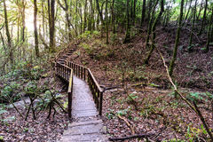 Wooden footpath nature trail at Doi Inthanon National Park in Chiang Mai, Thailand.  Royalty Free Stock Photography