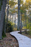 Wooden footpath at oak forest Stock Photo