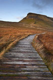 Wooden footpath over bog land leading ot Pen-y-Ghent  Stock Images