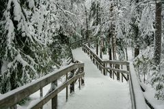 Wooden footpath in a picturesque winter forest royalty free stock image