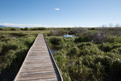 Wooden Footpath through Riparian Area. An old wooden footpath crosses a marshy riparian area, featuring long grass and mountains and clouds in the distance Stock Image